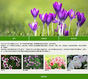 花的介绍简单网页