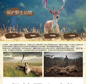 关于野生动物保护